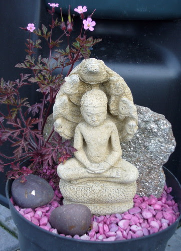 Buddha's Companion