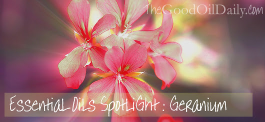 Essential Oil Spotlight: Geranium - The Good Oil Daily