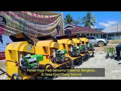 Gubernur Bengkulu Panen Raya Bersama Masyarakat Desa Kayu Elang Semidang Alas
