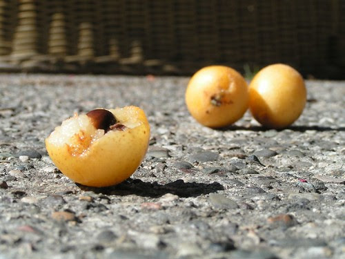two and a half loquats