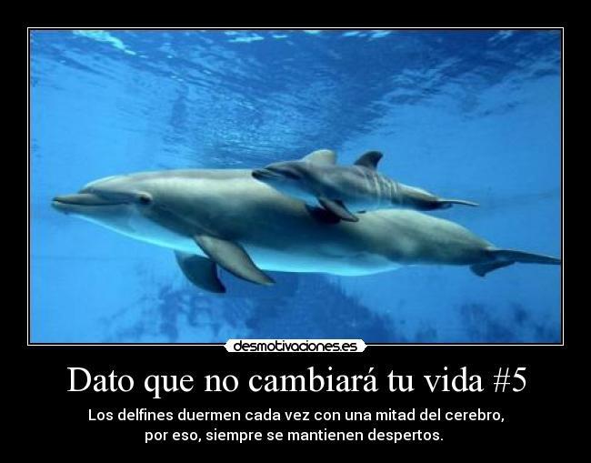 Imagenes Y Carteles De Delfines Pag 11 Desmotivaciones