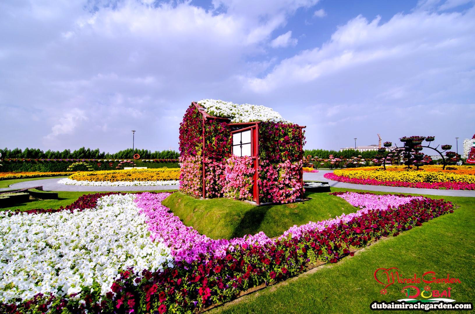 Dubai Miracle Garden 33