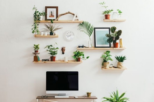 Indoor plants that will make your home healthier and help you sleep