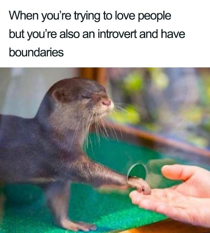 Introvert Memes