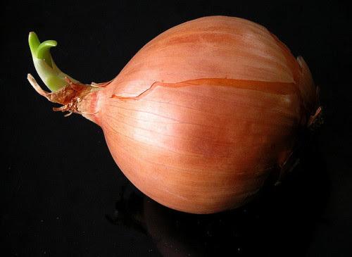 Onion - Liz West