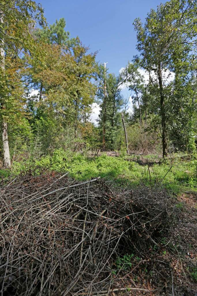 Stacks of cut brush and invasive plants at The Houston Arboretum & Nature Center trails. Photo: Steve Gonzales, Staff / © 2015 Houston Chronicle