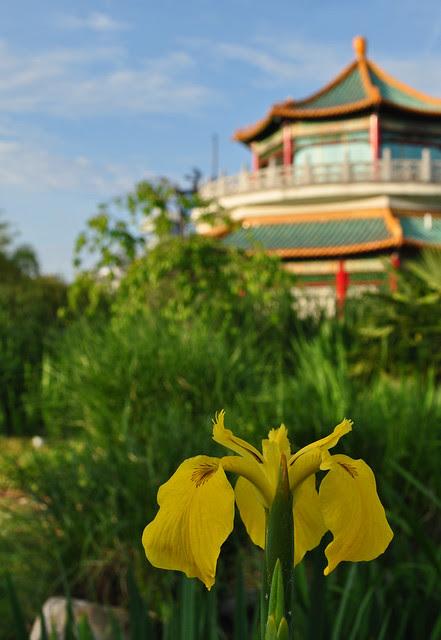 Iris and Pagoda