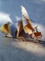 four dead leaves