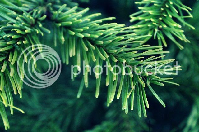 photo green_zpsec935424.jpg