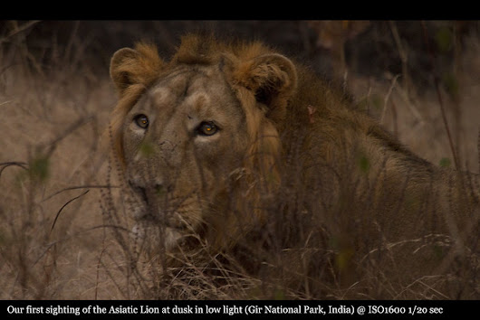 Gir National Park - The only place to see Asiatic Lion