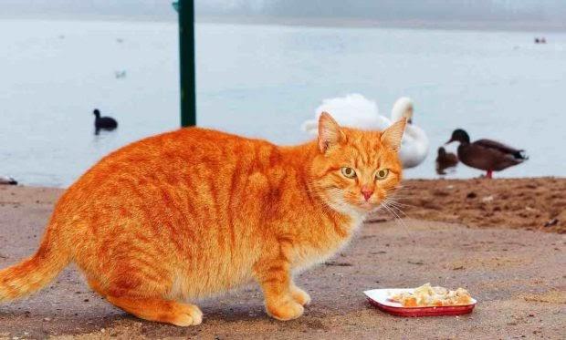 5 consejos para alimentar a un gato anciano