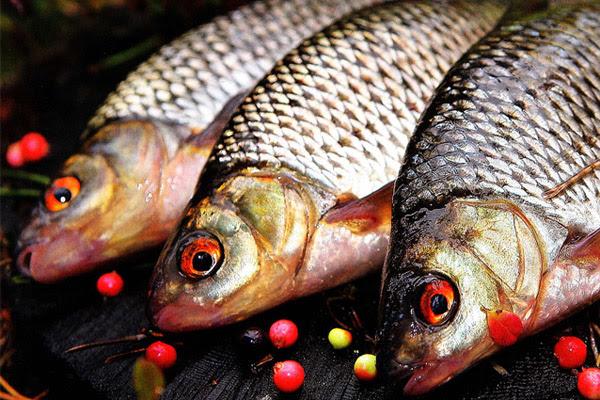 Рыбалка в ноябре, какую рыбу ловить в ноябре, рыбалка в ноябре на щуку, рыбалка в ноябре на окуня, рыбалка в ноябре на судака, рыбалка в ноябре на налима, рыбалка в ноябре на карася, рыбалка в ноябре на леща, рыбалка в ноябре на плотву