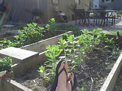 finnys sunny garden
