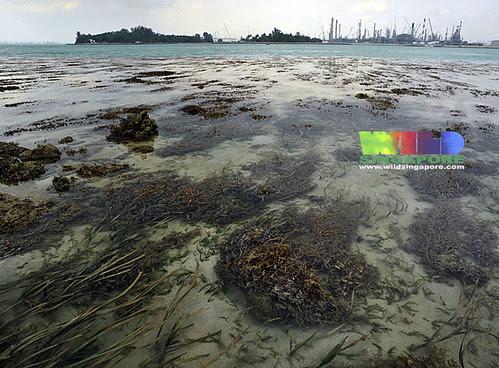 Terumbu Raya overlooking Pulau Hantu and Pulau Bukom