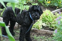 skippy in the garden 4