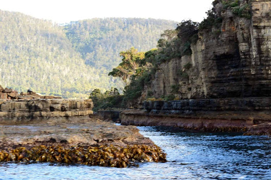 Tasman Island Cruise : One of Our All Time Favourite Travel Experiences - Four Around The World