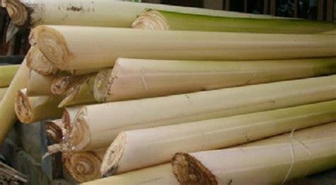 uii sulap batang pisang jadi biohidrogen