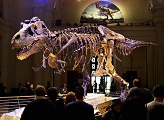 A 41-foot-long Tyrannosaurus rex named 'Sue,' at the Field Museum in Chicago, Illinois. (May 17, 2000) From Sue Ogrockidf, via Reuters, used w/o permission.
