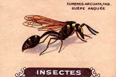 insecte 22