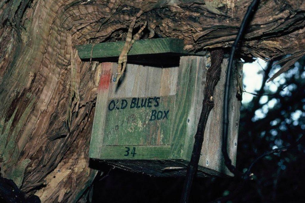 Old-Blue-box