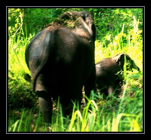 Muthanga Wild Life Santury