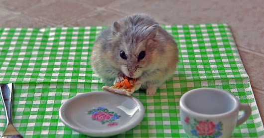 Watch a Tiny Hamster Nibbling on a Tiny Slice of Pizza