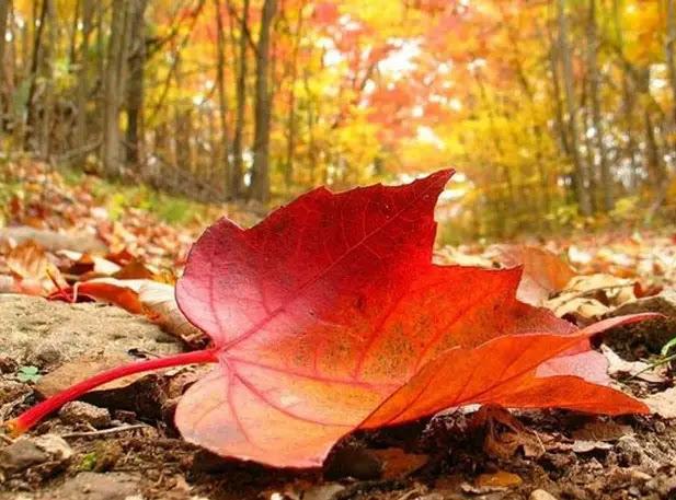 Resultado de imagen para hoja de otoño