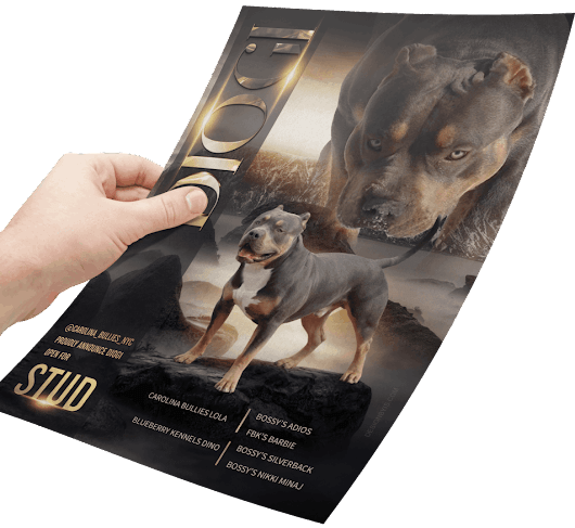 graphic design for canine,equine and feline breeders,clubs,kennels,cattery and all animal-related businesses, dog web design,logo design