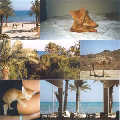 Djerba/Tunesien