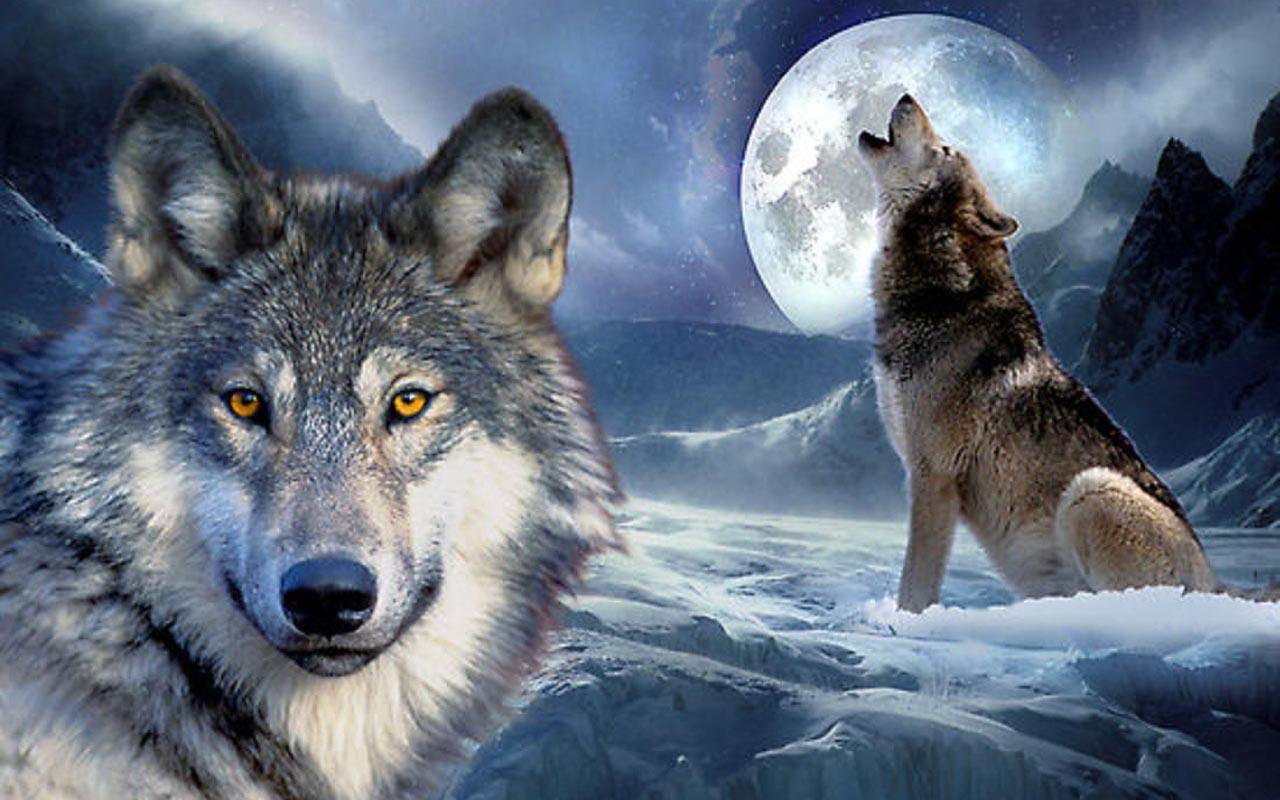 Wolf Backgrounds  Wallpaper Cave