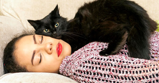 Pet cat Beebz is purr-fect life-saver as it rescues owner from epileptic fits