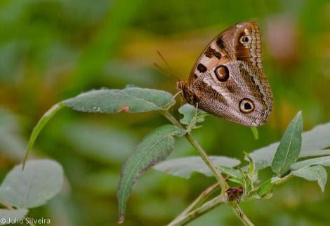 Por: borboletas mariposas