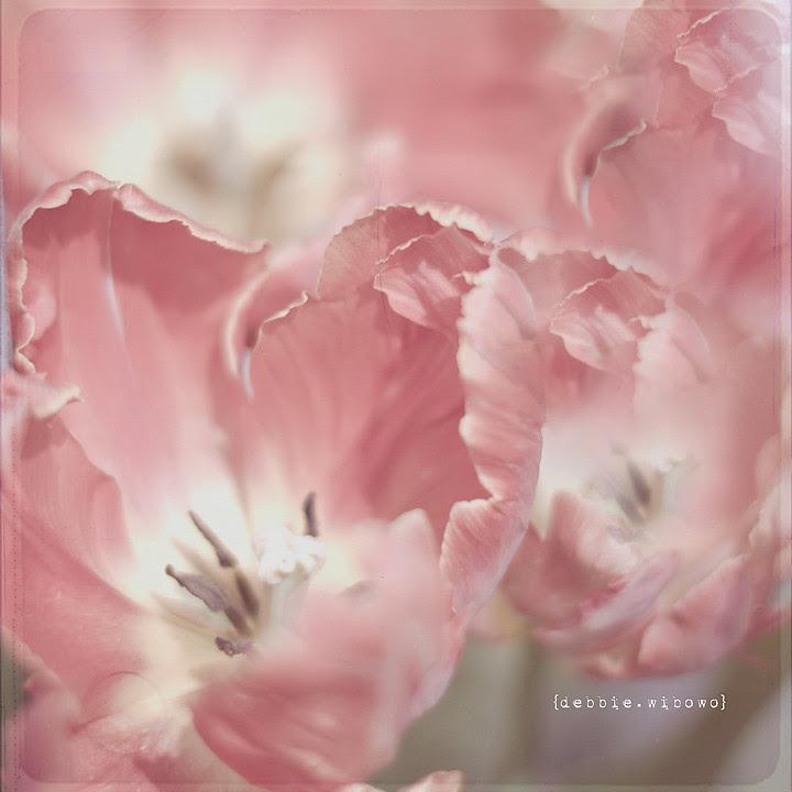 Resize Tulips 3