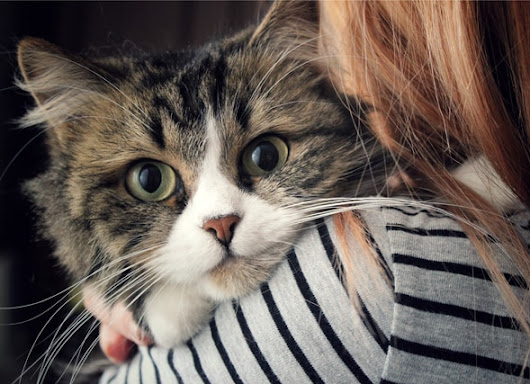 Why it Pays to be a Cat Lady: Studies Show Female Cat Owners Benefit the Most from Having a Pet