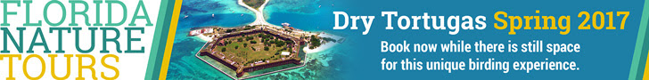 Florida Nature Tours - Dry Tortugas Spring 2017