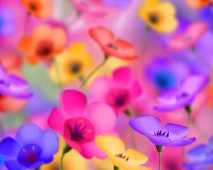 colorful-flowers-pictures-Favim.com-504132 (1)