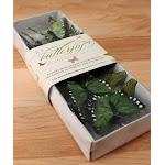 Wedding Star 9166-22 Beautiful Butterfly Decorative Set- Green