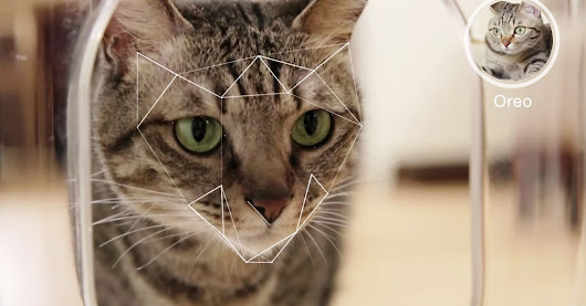 Smart Feeder With 'Cat Facial-Recognition' Tech Lets You Track Kitty's Appetite