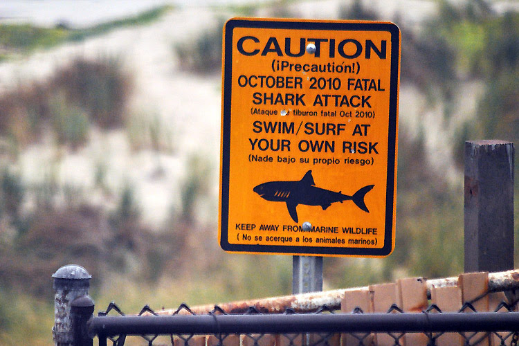 Shark-infested waters: surf at your own risk | Photo: Loco Steve