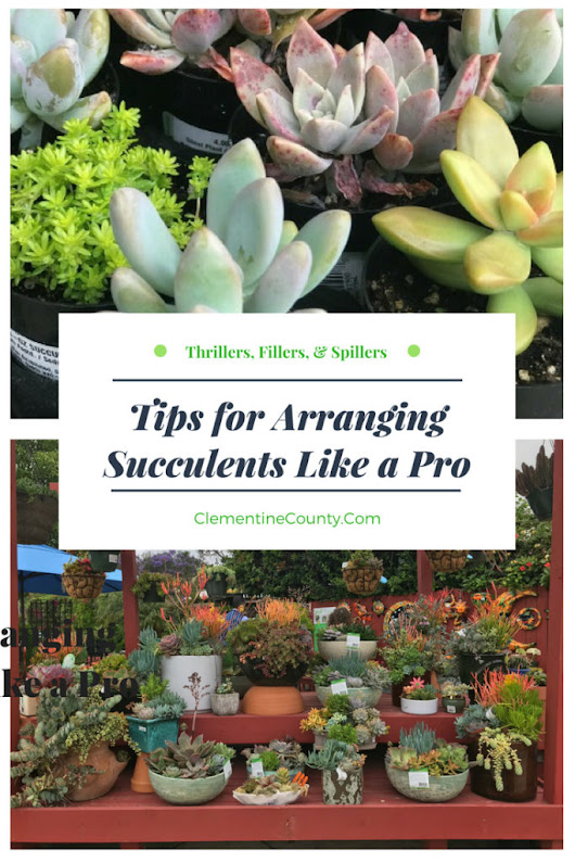 Tips for Arranging Succulents like a Pro | Clementine County