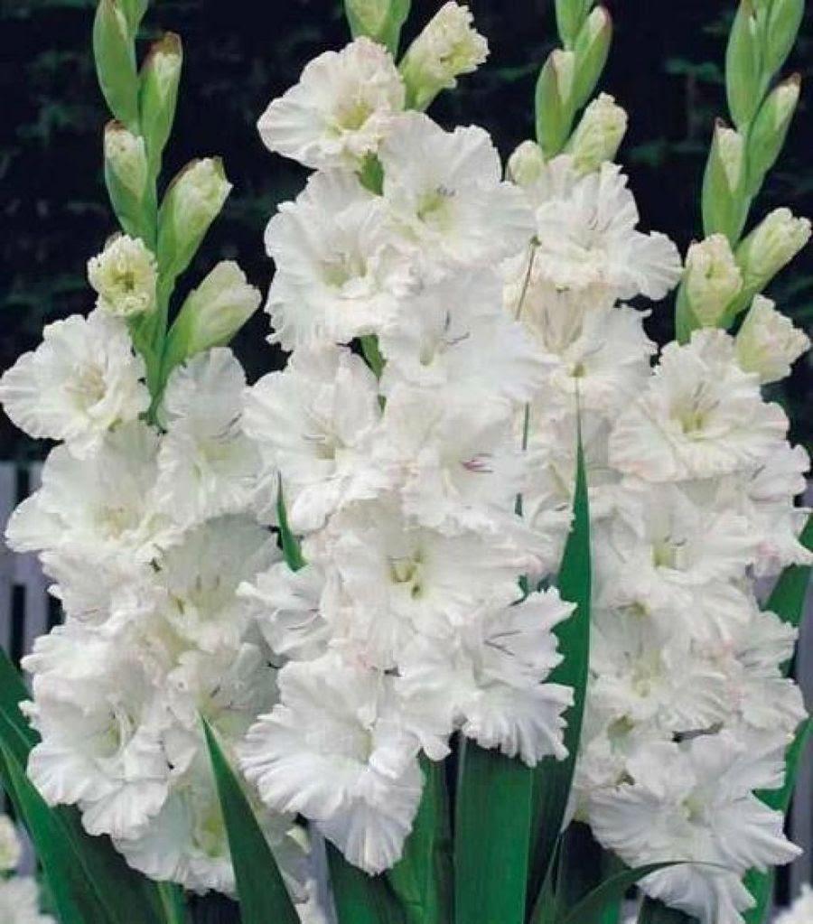 Flores Blancas Plantas