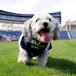 How Hank the stray dog became a hit at Brewers camp