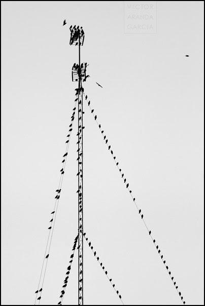 Pájaros sobre cables y antenas al atardecer