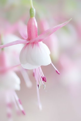 FELIZ QUINTA FLOWER !!! by Menina Prendada -