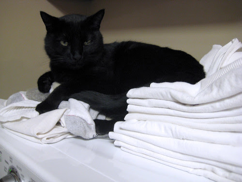 Clean Laundry and Cat