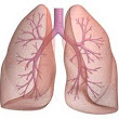 Asthma Overview -  FilterBuy.com