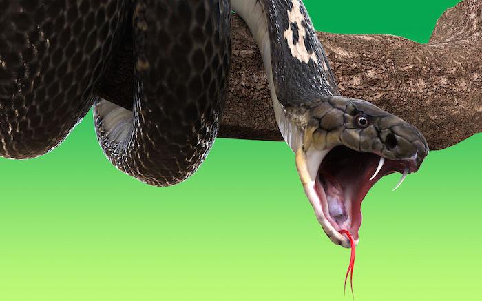 Dreaming About A Snake Bite Dream Interpretation Symbols