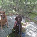Sampson and Delilah - Heart Like a Dog