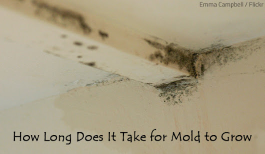 How Long Does It Take for Mold to Grow | RestorationMaster Finder