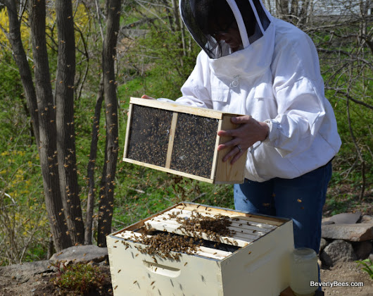 Beginner Beekeeper's Guide - Beverly Bees